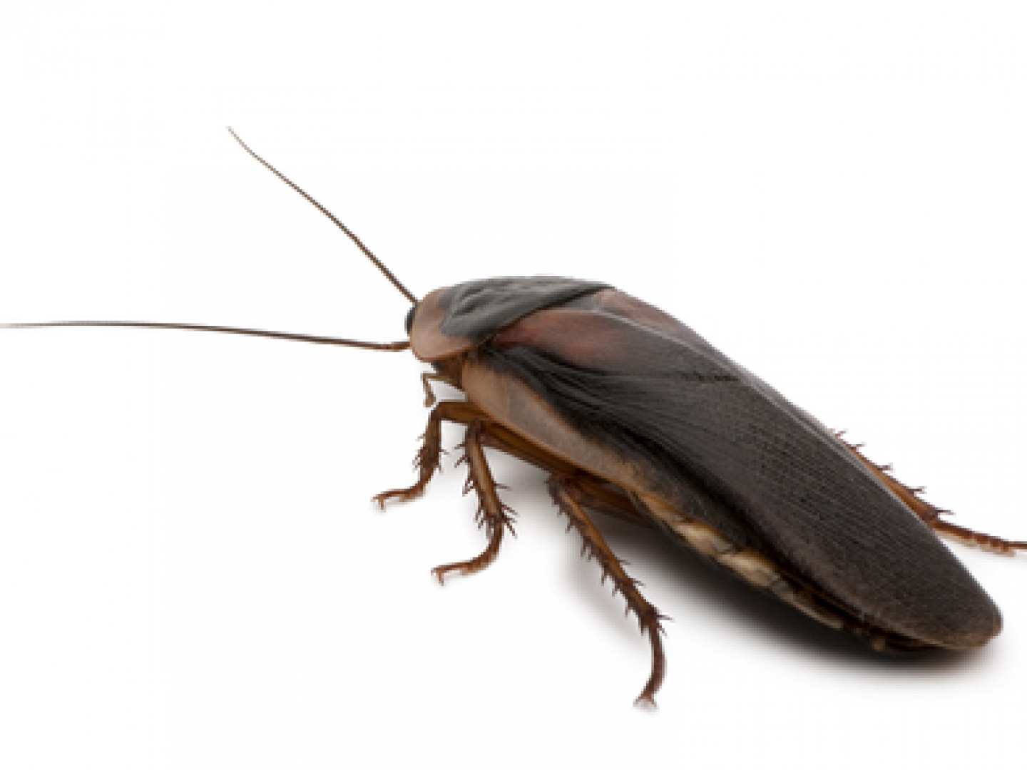 Shine a Light on Your Roach Problem